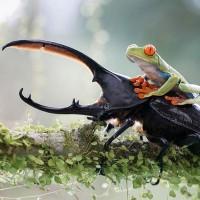 Żaby (Ranidae)