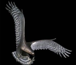 Orzeł Haasta (Harpagornis moorei, Harpagornis assimilis, Hieraaetus moorei)